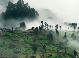 image of Kodaikanal Tour
